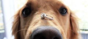 Homem surpreende a namorada com pedido de casamento na coleira do cachorro!