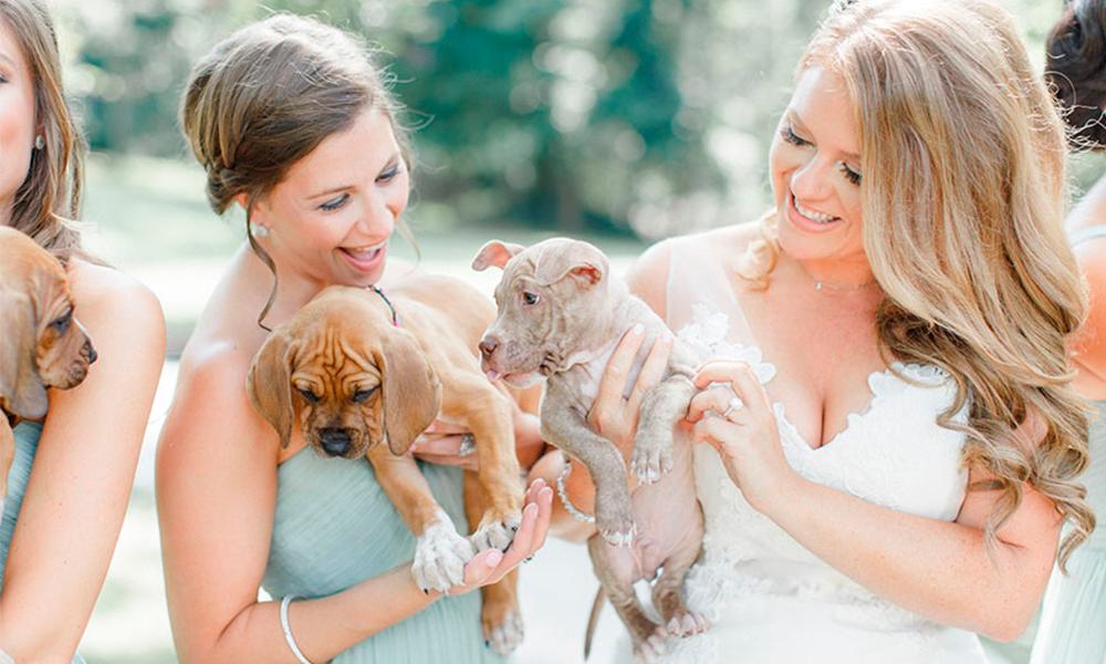 Noiva substitui buquê de flores no casamento por filhotes para adoção!