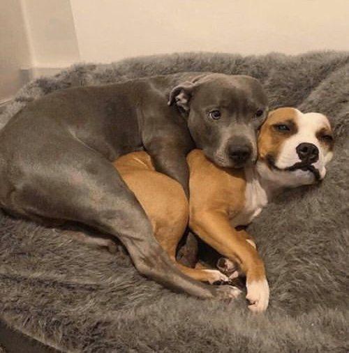 cachorros juntinhos