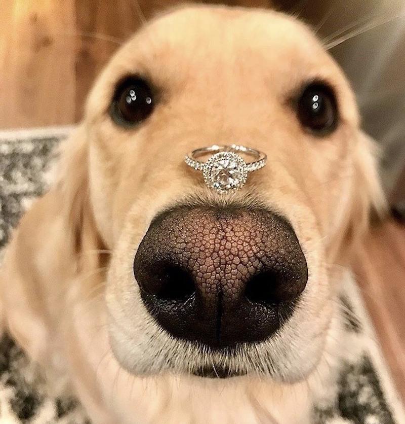 pedido de casamento com anel de diamante