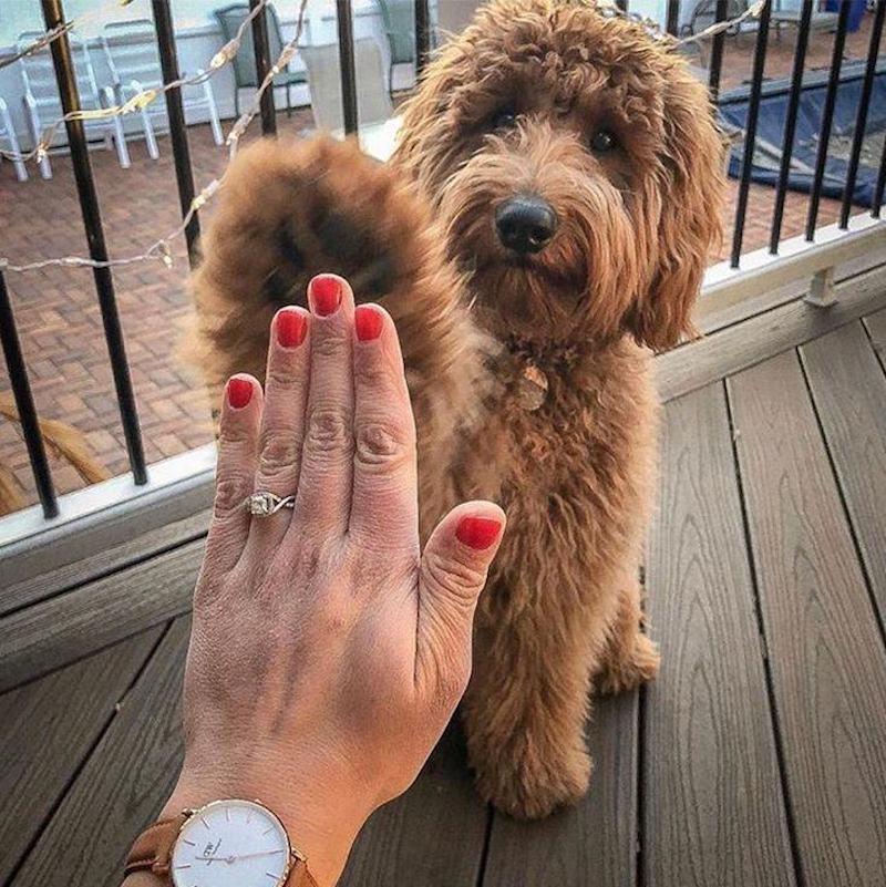 anel de noivado e cão