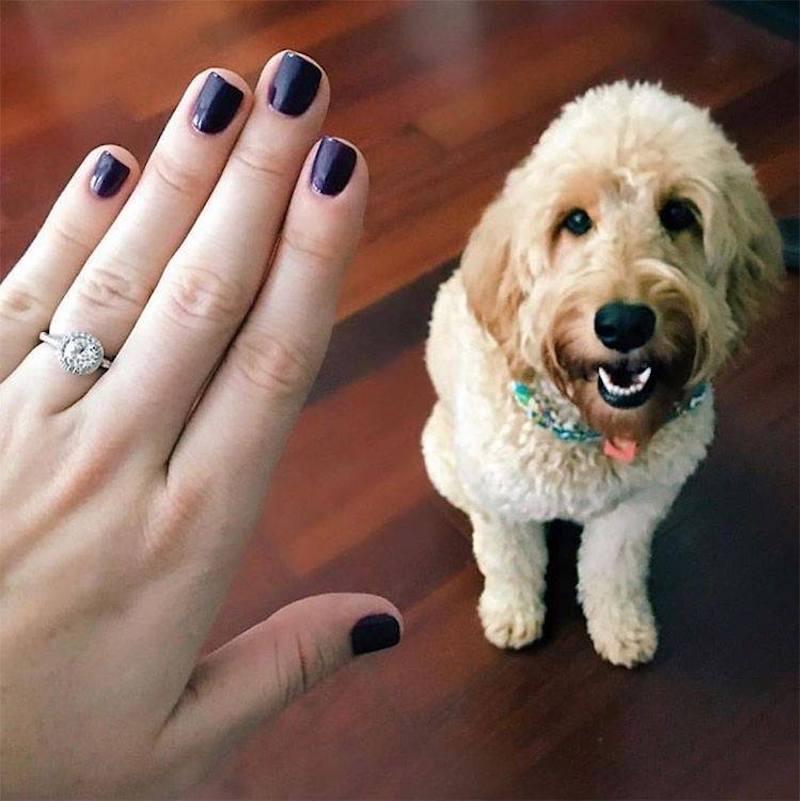 fotos de anel de noivado e cão