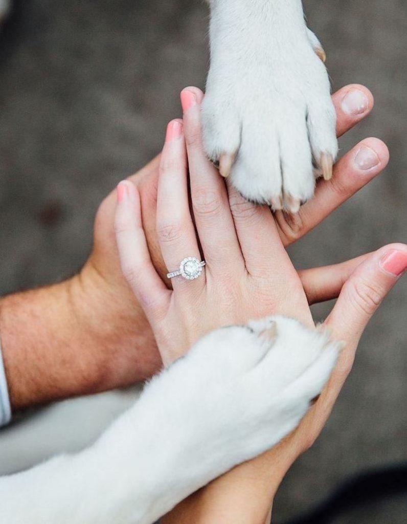 casal de noivos apaixonado por cães