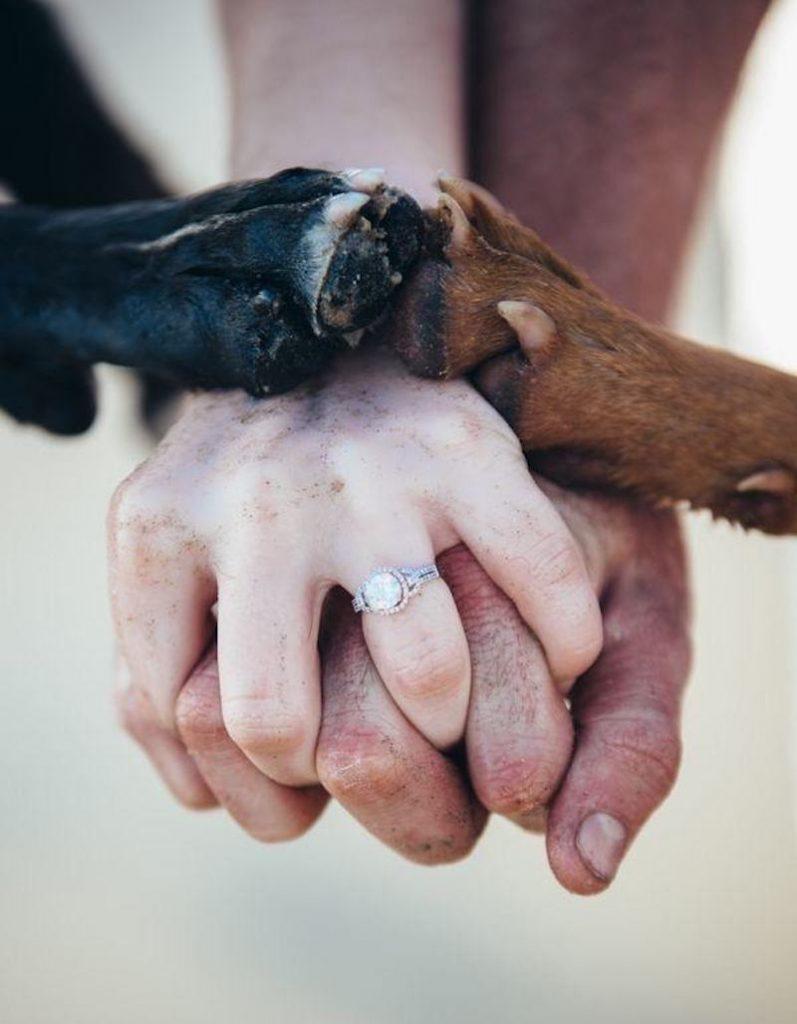 noivos e seus cães