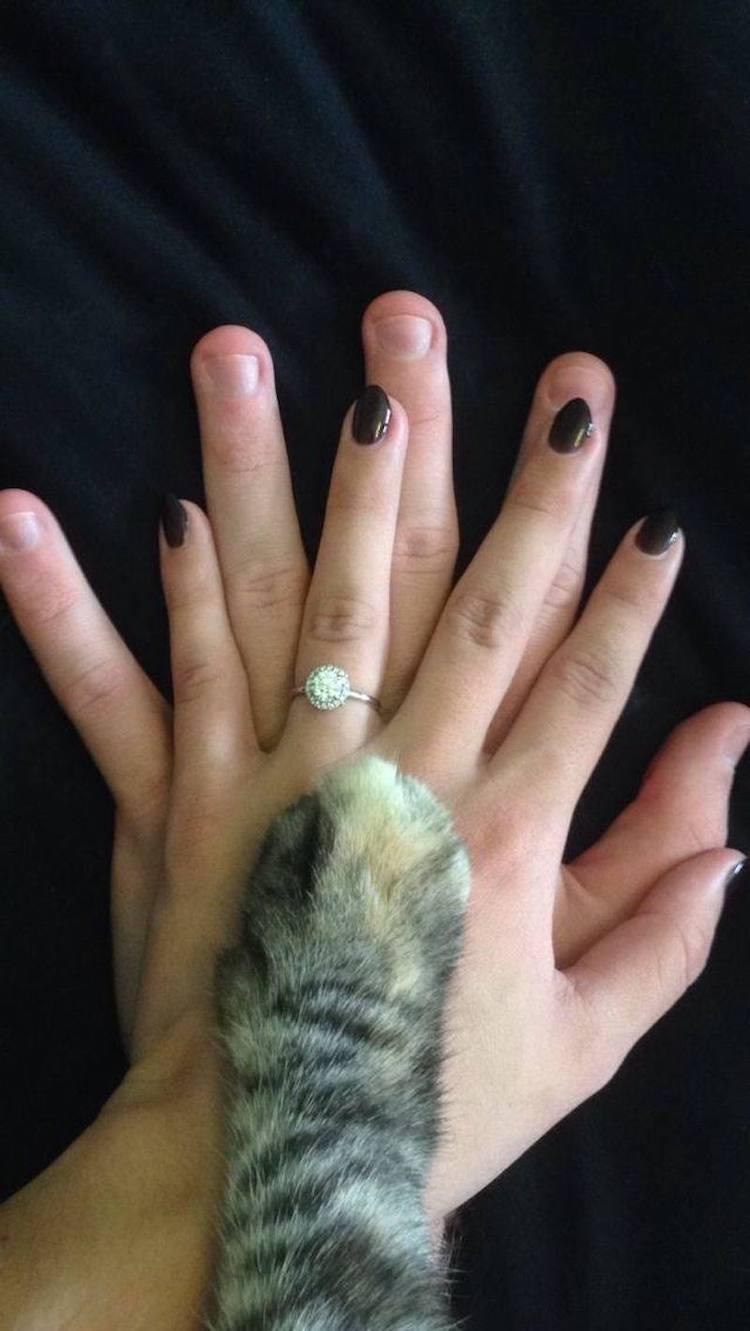 casal de noivos apaixonado por seu gato