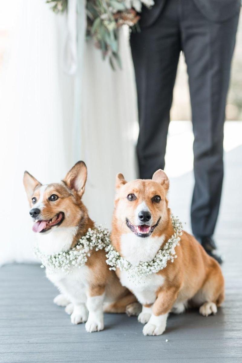cães em cerimônia de casamento
