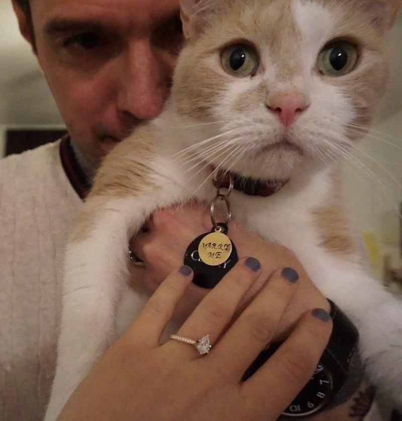 casal apaixonado por gato