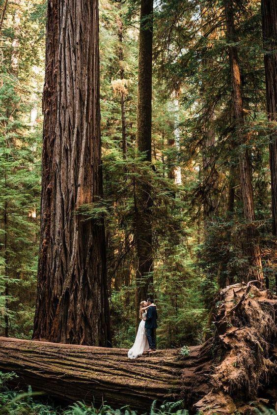 elopement wedding em floresta