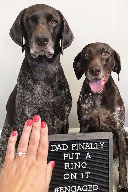 anunciando noivado ao lado de seus pets